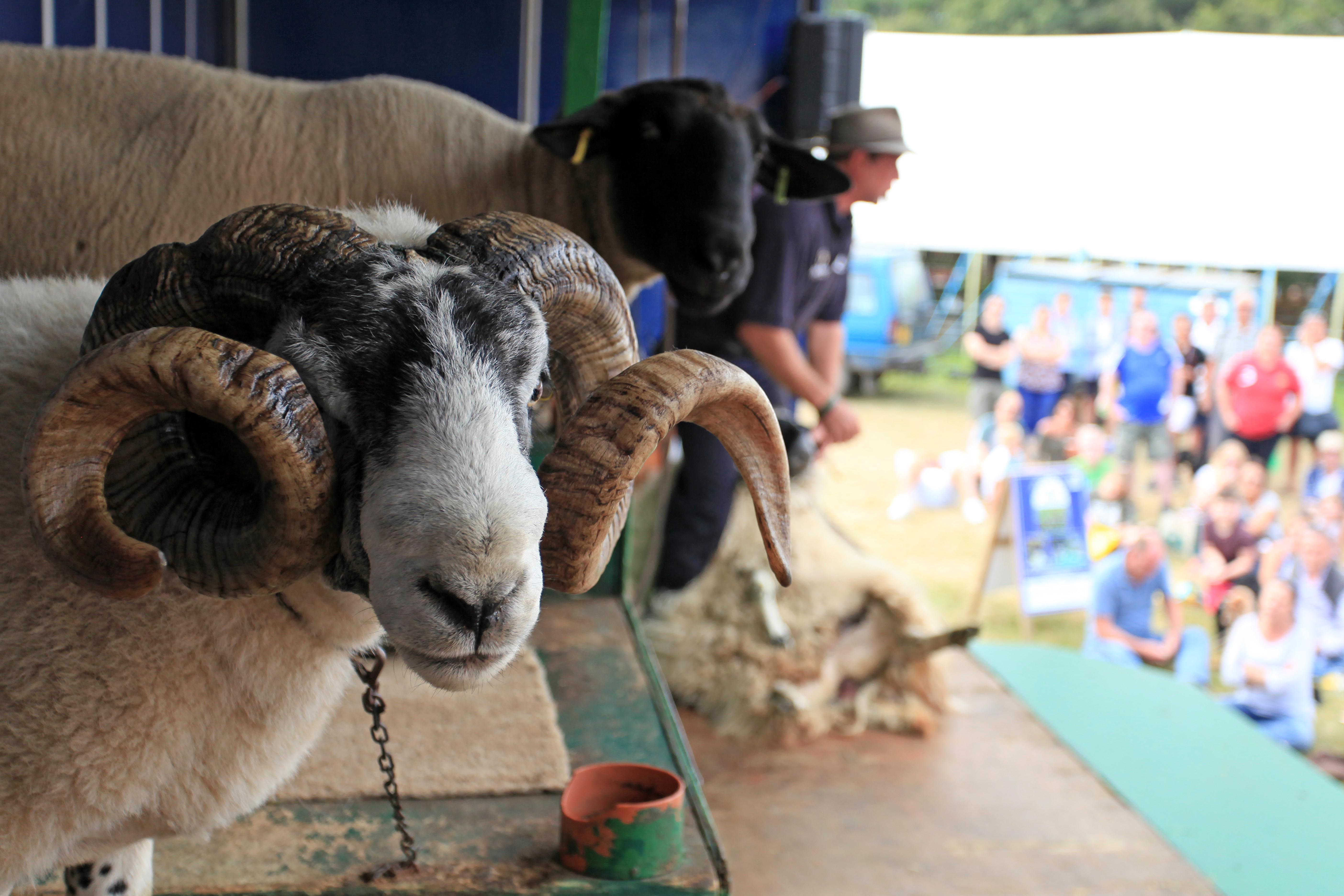 Whats On - Attractions & Activities l New Forest Show
