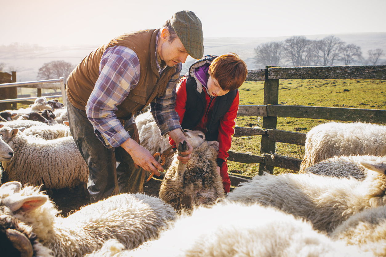£30,000 funding on offer to local businesses in Quilter Cheviot's Rural Innovation Programme